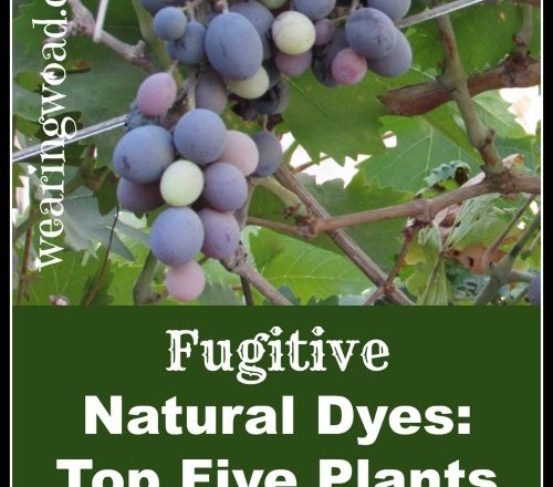 Fugitive Natural Dyes: Top Five Plants to Never Use for Natural Dyes