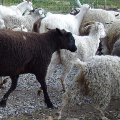 Wool Felt: how to test if your fleece will felt
