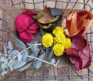 dye plants from A Garden to Dye For