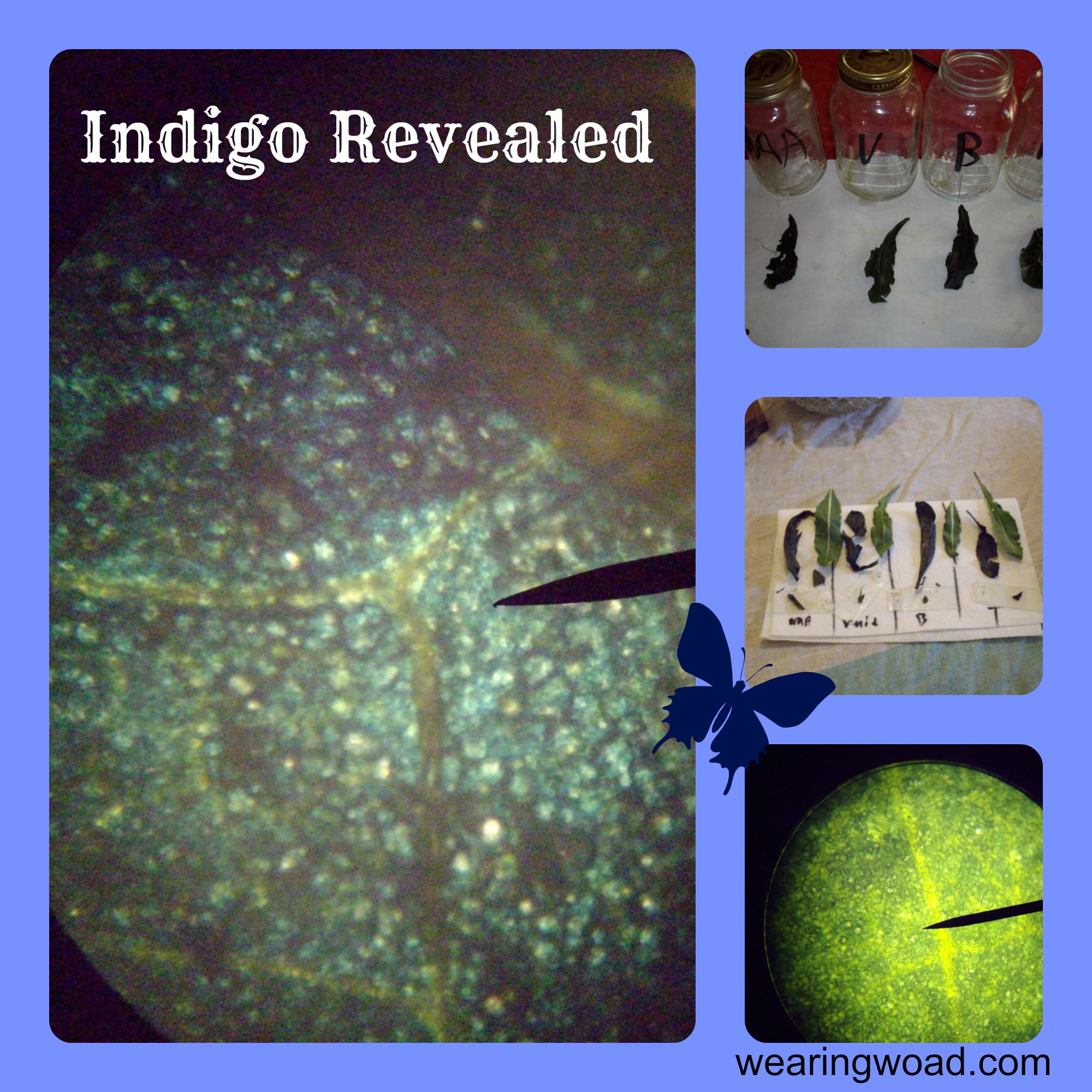 How to Identify Indigo in Woad