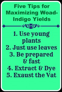 Top five tips for maximizing woad-indigo colour yields