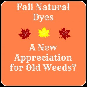 Fall Natural Dyes