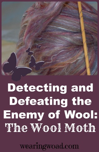 detecting and defeating the enemy of wool_the wool moth